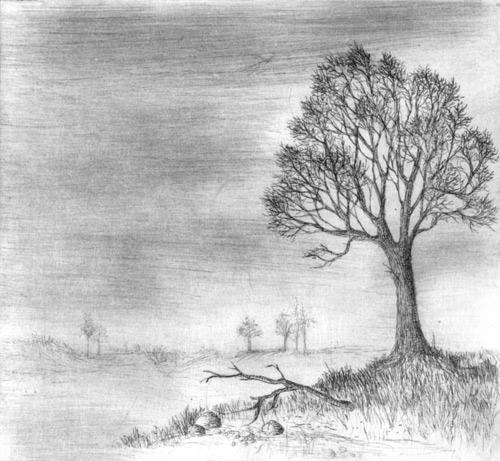 Klemz(Knop): tree outside paradise {arbre sans bon ou mauvais}